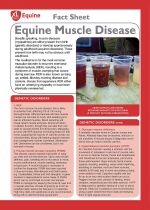 Equine Muscle Disease (Azoturia)