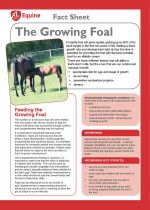 The growing foal